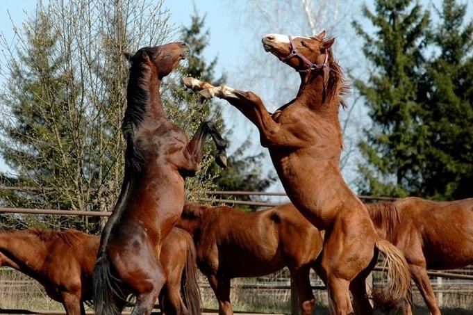 kas yra zirgu nario dydis bendras plotas vienam seimos nariui